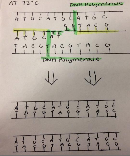 PCR 22.png