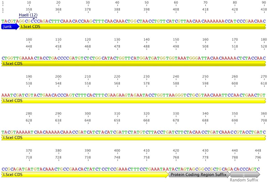 Figure 6: RBS_ISceI fragment 2
