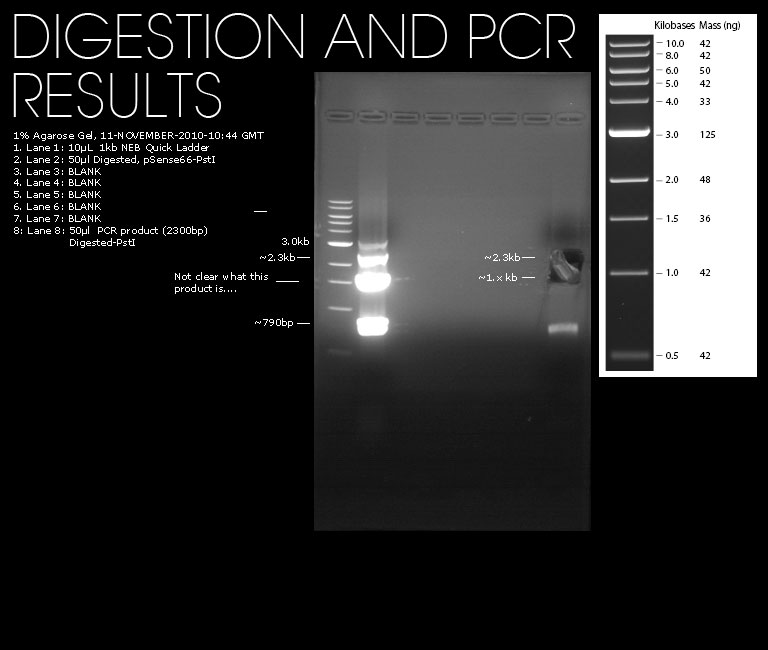 Image:11112010-psense66-transformed-ligation-test.jpg