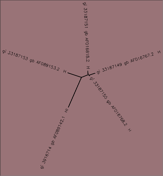 File:AV-BIOL368-ClustalW-tree.png