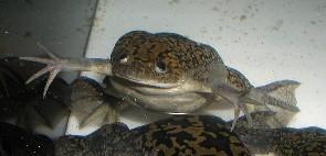 File:Frog 3.jpg