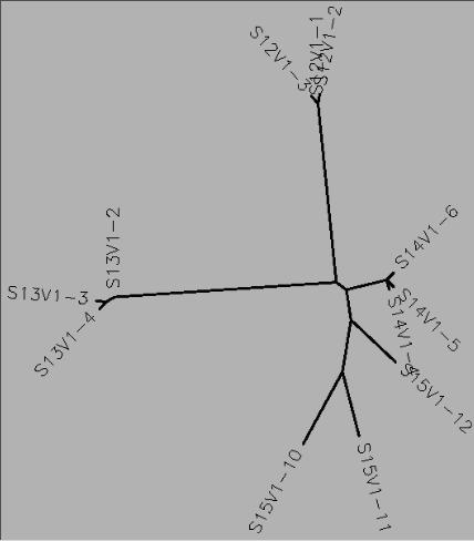 Unrooted Genetic Tree of Selected Sequences of Subjects 12, 13, 14, and 15