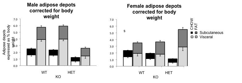File:Female adipose subcut and visc.jpg