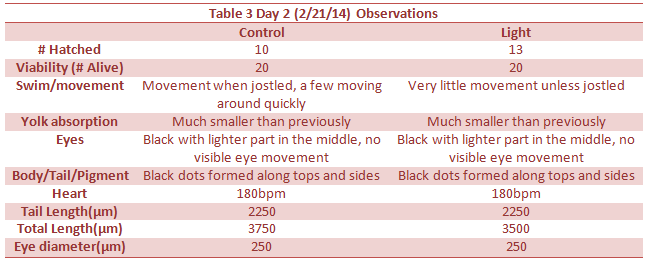 Day 3 Observations.png
