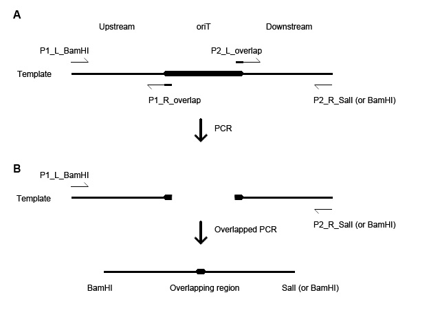 how to sequence end pcr product