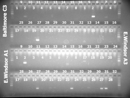 4Mar'10 Baltimore(C3),E.Windsor(A1,A3).jpg