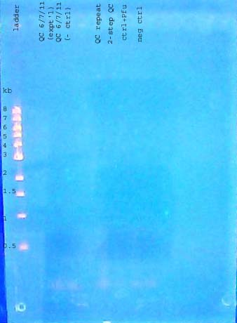 File:Gel dna 110609 annotated.jpg