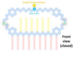 File:BM12 nanosaurs 6 edgestaple s.jpg