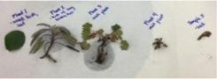 Sample plants.jpg