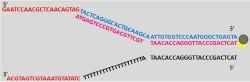 File:BM12 Nanosaurs Aptamer lock blocker1 250.jpg
