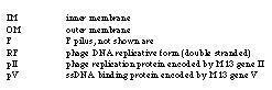 File:Macintosh HD-Users-nkuldell-Desktop-M13K07 plasmid-lifecycle key.jpeg