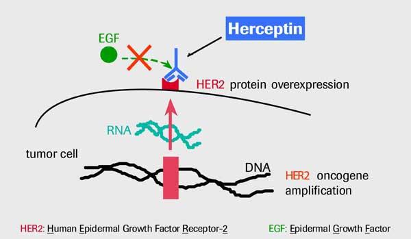 File:Herceptin.jpg