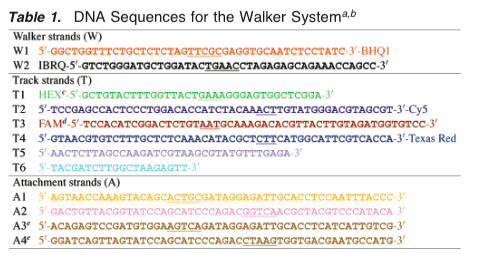 File:DNAsequences.png
