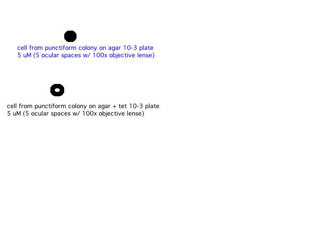 File:HHSdrawings.jpg