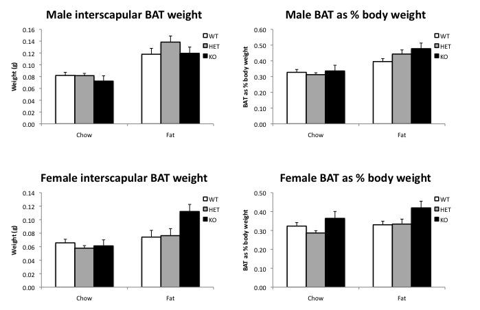 File:Male and female BAT.jpg