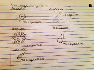 Organisms.png