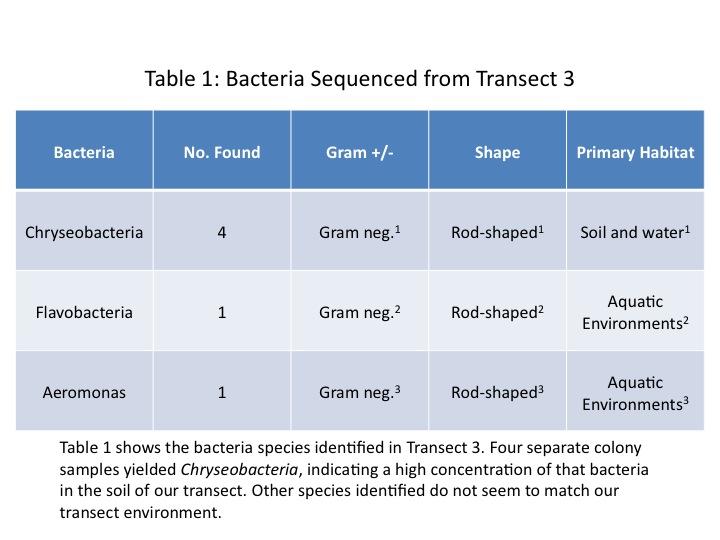 File:Dagum Bacteria Table.jpg
