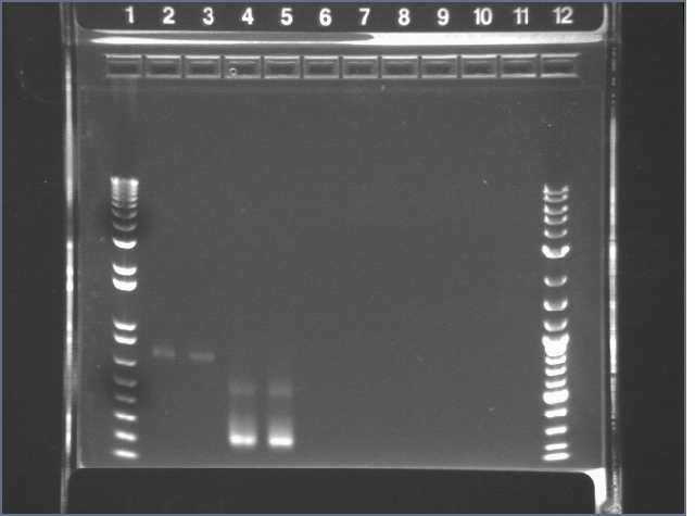 03-10 PCR pur PT.jpg