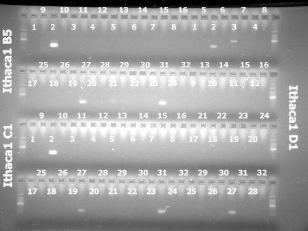 3Mar'10 Ithaca1(B5,C1,D1).jpg