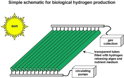 File:Bioreactor-schematic.jpg