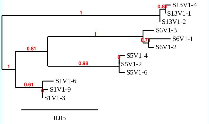 Jmenzago Week5 Activity2 PhylogeneticTree.PNG