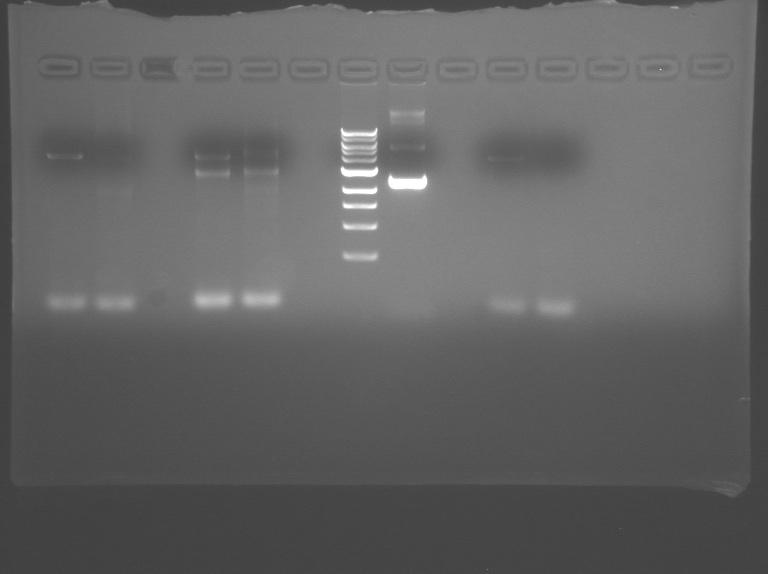 File:S10 M2D3 TR gel-1.jpg