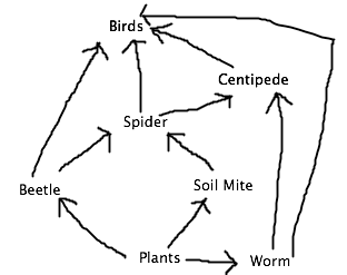 This food web.png