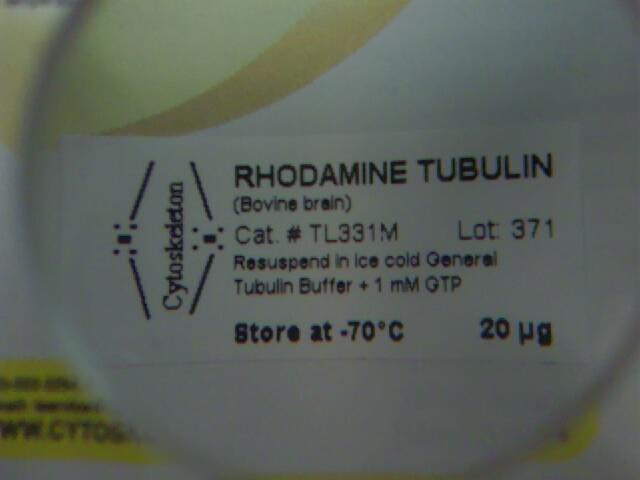 File:090615 Rhodamine tubulin.jpg