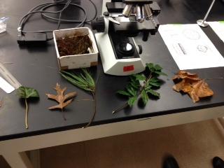 File:Plant- 2-5.JPG