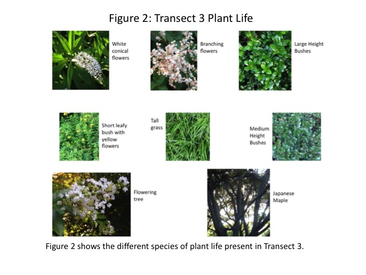 Dagum Transect 3 Plant Pics 2.jpg