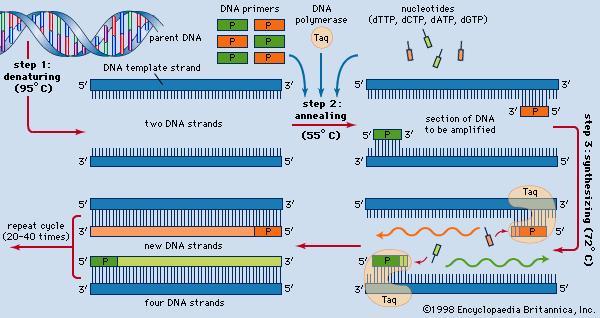 PCR lab.jpg