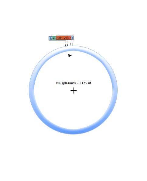File:RBS (plasmid).jpg