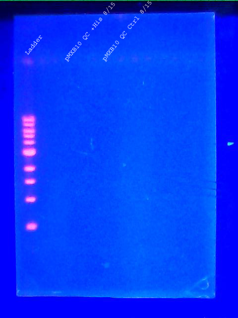 DNA gel pMXB10 8.16.2011 labeled.jpg