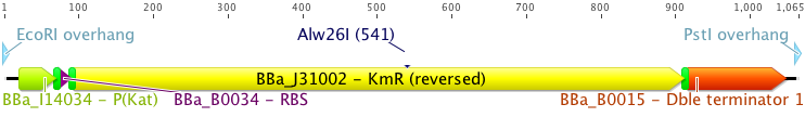 File:KmR final.png