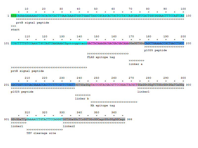 P1025-epitope.jpg