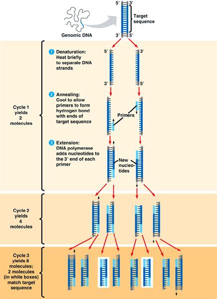 PCR Pic 1.jpg