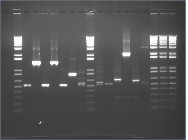 File:Stroustrup 9 6 PCR 3.jpg