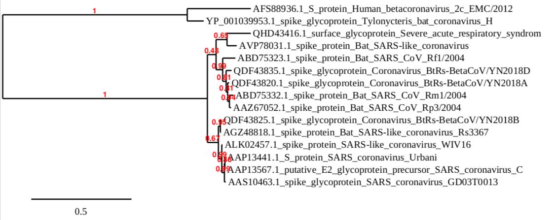 Owen R Dailey Phylogenetic Tree.png