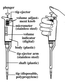Image:PipetmanLabels.jpg
