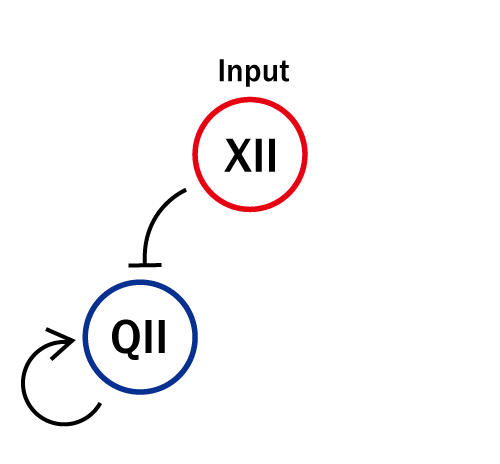 The Concept of the Experiment of QII