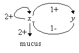 1.Graph of interactions for mucus production in P.aeruginosa. Each arrow indicates an interaction; the sign indicates a positive or negative effect, and the integer is the threshold of the interaction; when the regulator is beyond the threshold, the interaction is effective.