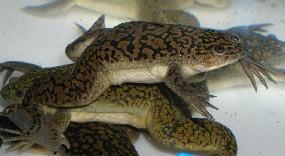 File:Frog 2.jpg