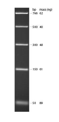 PCR marker picsm.jpg