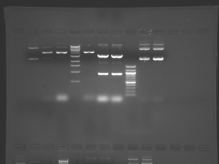 File:S10 M2D5 TR gel-Green.jpg