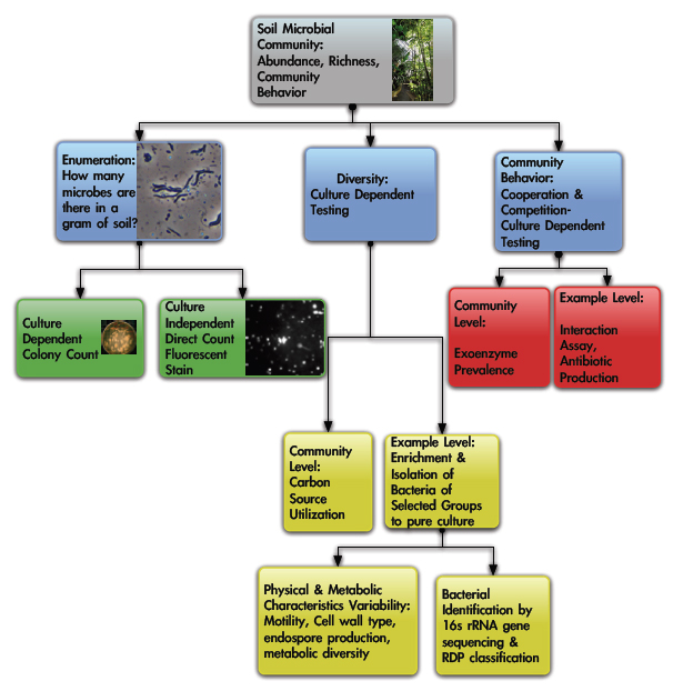 Image:Schema_soil_community_project.jpg