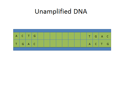 Image:Unamplified Dna.jpg