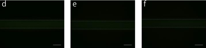 File:Biomod-2012-UTokyo-UT-Hongo Fixing on microfluidics (image-2) ver1.jpg