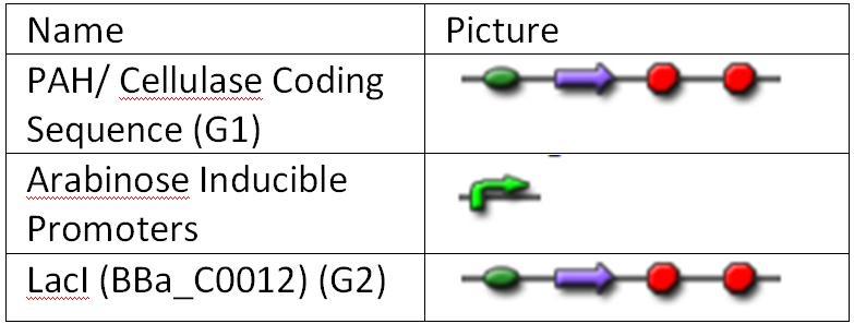 File:II09 clonstratm1.JPG