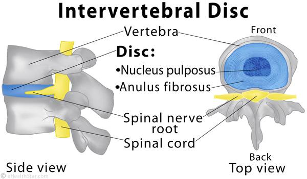 Intervertebral-disc.jpg