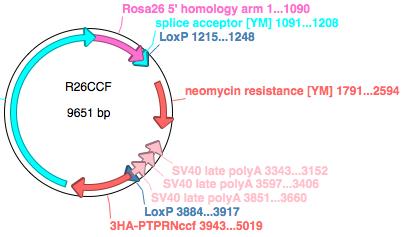 File:ApE circular sequence diagram.png